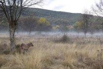Корова вблизи голых деревьев в Туманные луга — стоковое фото