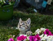 Кошеня Ігри у саду — стокове фото