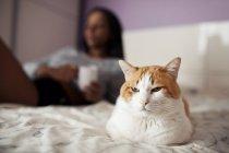 Retrato de um gato sentado na cama no fundo da garota turva — Fotografia de Stock