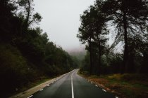 Empty road leading in misty forest — Stock Photo