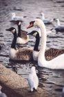 Oiseaux sur le lac dans le parc — Photo de stock