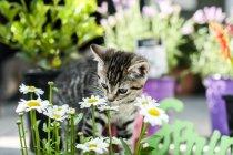 Gattino che gioca nel giardino — Foto stock