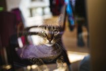 Tabby cat looking through window pane — Stock Photo