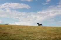 Лошади на лугу — стоковое фото