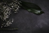 Top view of tropical palm leaf and branch of small white flowers on dark surface — Stock Photo