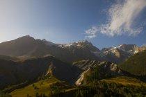 Montagnes recouvertes d'herbe et des arbres — Photo de stock