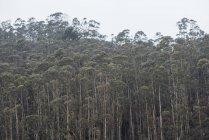 Alberi fitti verdi al paesaggio della foresta. — Foto stock