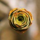 Прямо над подання соковитим рослин — стокове фото