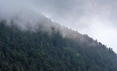 Fernblick über neblige Wolke über dem Wald am Hang — Stockfoto