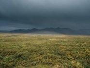 Зелені prairie в горах — стокове фото