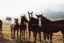 Табун лошадей, стоя на забор в паддоке в горах. — стоковое фото