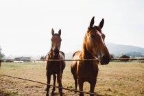 Коні, які стоять біля огорожі в паддоках у лузі — стокове фото