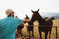 Вид збоку бородатого мужчини palming коней в туманний сільській місцевості — стокове фото