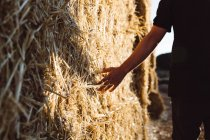 Crop male touching haystacks on sunny day — Stock Photo