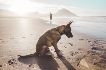 Side view of German shepherd dog sitting on shore — Stock Photo