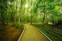 Empty pathway amid green forest on sunny day — Stock Photo