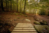 Wooden board walk in spring forest — Stock Photo