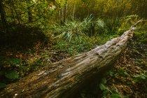 Tronc d'arbre tombé au vert de la forêt — Photo de stock