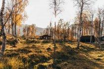 En journée ensoleillée, vue sur petits Gîtes ruraux dans la forêt d'automne. — Photo de stock