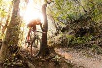 Велосипедист на велосипеде между двумя деревьями в лесу в солнечный день . — стоковое фото
