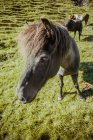 Close up view of black horse on countryside lawn — Stock Photo