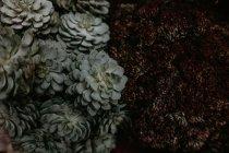 Vue de dessus de plantes inhabituelles vertes et rouge foncé . — Photo de stock