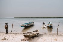 Goree, Senegal- December 6, 2017: View to river shore with moored boats and man washing goats in water — Stock Photo