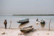 Gorée, Sénégal-6 décembre 2017: Vue sur la rive de la rivière avec bateaux amarrés et homme chèvres dans l'eau de lavage — Photo de stock