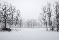 Landscape of leafless forest in winter scene — Stock Photo