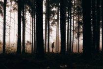 Silhouette of man in foggy dark woods — Stock Photo
