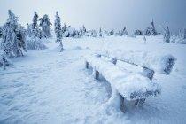 Cerrar vista a rama pequeño, cubierto con nieve y hielo en el bosque de invierno. - foto de stock