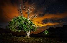 Blick auf großen grünen Baum unter wolkenverhangenem Abendhimmel in der Natur — Stockfoto