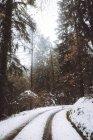 Mostra di strada tutta curve nella foresta di inverno — Foto stock