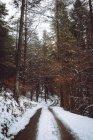 Strada che conduce nel bosco di abeti di inverno — Foto stock