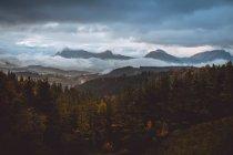 Аэрофотоснимок Осенний лес и горы на пасмурный осенний день. — стоковое фото