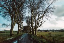 Empty wet asphalt road in woods at coutryside — Stock Photo