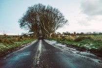 Carretera asfalto vacía en el bosque en medio de campos de campo - foto de stock