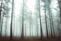 Vue panoramique sur les bois dans la forêt brumeuse — Photo de stock
