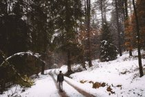 Back view to tourist walking on rural road in winter forest. — Stock Photo