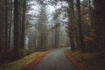 Idyllic view to asphalt road in autumn forest in foggy day. — Stock Photo