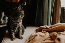 Кот сидит за столом и смотрит в окно — стоковое фото