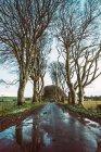 Vue sur la route asphaltée humide et les bois dans un champ vert — Photo de stock