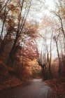 Осенние деревья над асфальтовая дорога в лесу — стоковое фото