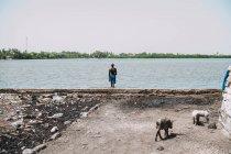 Joal Fadiout, Senegal- December 7, 2017: Pigs pasturing on rural road on background of man walking into water at seashore — Stock Photo