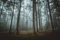 Вид на туманный осенний лес в утро. — стоковое фото