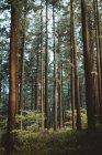 Переглянути високий ліс в осінньому лісі — стокове фото