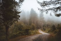 Rural road in misty green forest — Stock Photo