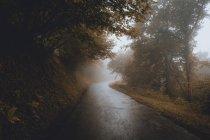 Wet asphalt road in foggy autumn woods — Stock Photo
