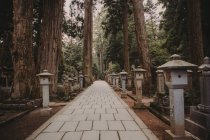 Small traditional Asian posts along pavement alley in green forest. — Stock Photo