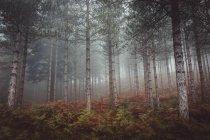 Барвисті осіннього лісу, на схилі пагорба — стокове фото
